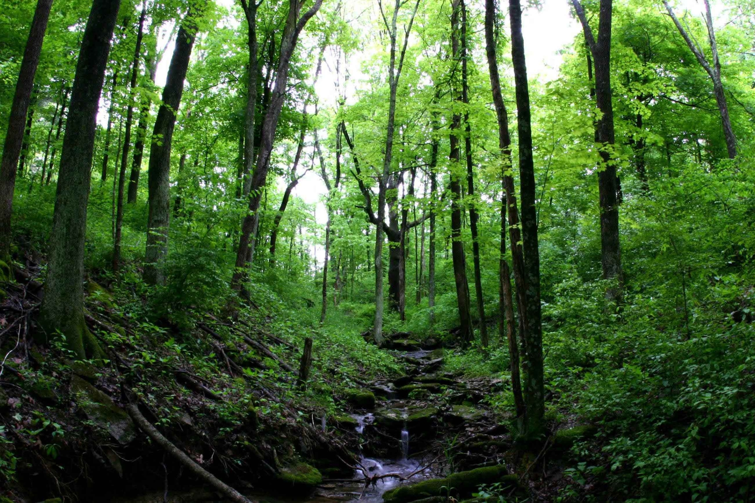 Green trees in a lush forest saved by increased environmental conservation efforts.
